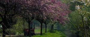 prunes-amstelglorie-960x400